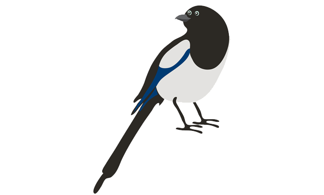 magpies! Claire Murray illustrator