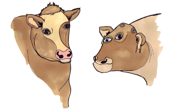 cows by claire murray